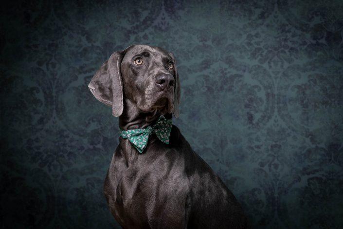 Hundeportrait Salzburg, Christian Streili Photography